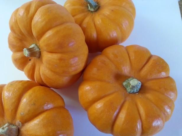 Mini Pumpkins | Goan Imports